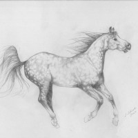 Dappled-Horse_BW