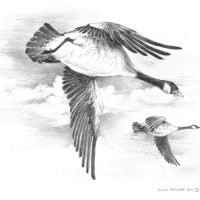 Geese_BW